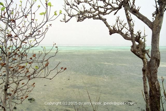(Almost) leafless trees after a typhoon, from Kula Place, Yap