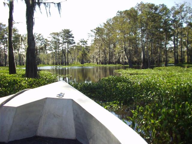 Boat trip through the Atchafalaya Swamp, Louisiana