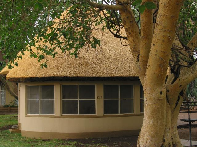 Bungalow and tree at Letaba rest camp