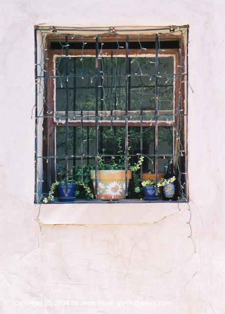 Window with plants and lights