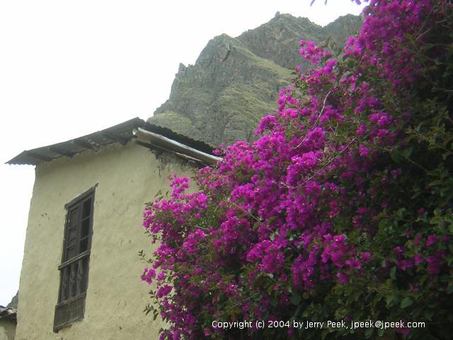 Flowers, building and mountains behind them, Ollantaytambo, Peru